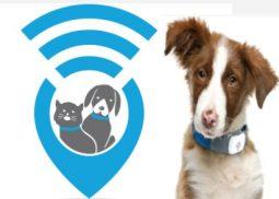 pet gps tracker 255x182