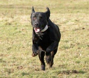 dog runs away 300x263