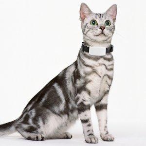 gps tracker cats